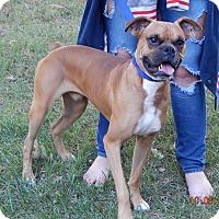 Adopt A Pet :: Deimos(45 lb) Fun, Smart Boy! - Williamsport, MD