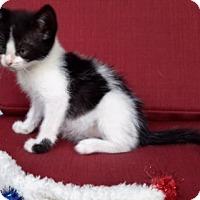 Adopt A Pet :: Dottie - Mobile, AL