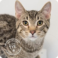 Adopt A Pet :: Tye and Bay - St. Paul, MN