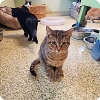 Adopt A Pet :: Grinell - Indianapolis, IN