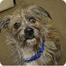 Adopt A Pet :: Enzo