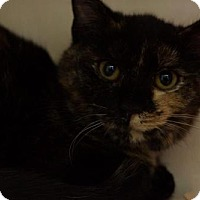 Adopt A Pet :: Sheba - Lancaster, PA