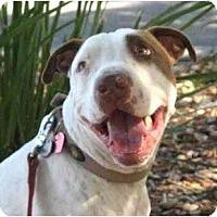 Adopt A Pet :: Jack - La Honda, CA