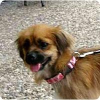 Adopt A Pet :: Vanna - Kingwood, TX