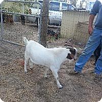 Adopt A Pet :: Eliott - Citrus Springs, FL