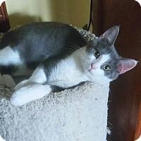 Adopt A Pet :: Ascher - Cleveland, OH