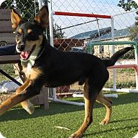 Adopt A Pet :: Waco - Meridian, ID