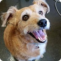 Adopt A Pet :: Finley - Homewood, AL