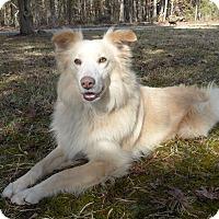 Adopt A Pet :: Bingo Boppy - Mocksville, NC