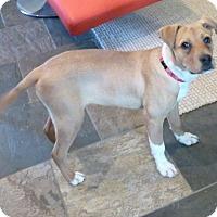 Adopt A Pet :: TANNER - Paron, AR