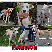Adopt A Pet :: Branson - Meet Him! - Norwalk, CT