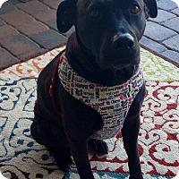 Adopt A Pet :: DOOLEY - Boca Raton, FL