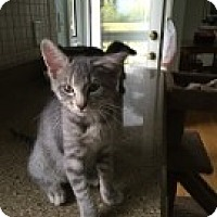 Adopt A Pet :: Crawford - McHenry, IL
