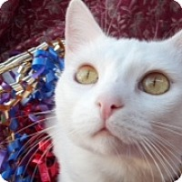 Adopt A Pet :: Snowball - Scottsdale, AZ