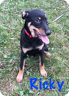 Dogs To Adopt In Fort Wayne Indiana