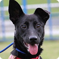 Adopt A Pet :: Meimei - San Francisco, CA