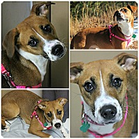 Adopt A Pet :: Pumpkin - Forked River, NJ