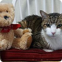 Adopt A Pet :: Paul - Mt Vernon, NY