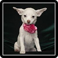 Adopt A Pet :: Isabella - San Diego, CA