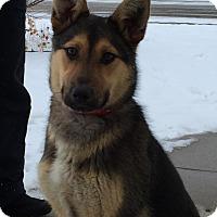Adopt A Pet :: duke - Saskatoon, SK