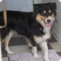 Adopt A Pet :: Jinx - Howell, MI