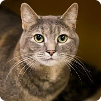 Adopt A Pet :: Linney - Kettering, OH