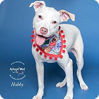 Adopt A Pet :: Hobby - Houston, TX
