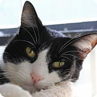 Adopt A Pet :: Artichoke - Martinsville, IN