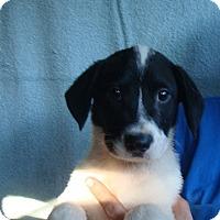 Adopt A Pet :: Twister - Oviedo, FL