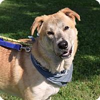 Adopt A Pet :: Daryl - Canastota, NY