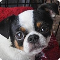 Adopt A Pet :: Alvin - Atlanta, GA