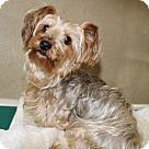 Adopt A Pet :: 22798 - Hydra