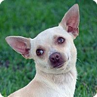 Adopt A Pet :: Pixel - Mountain Center, CA
