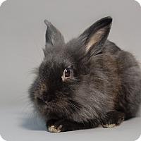 Adopt A Pet :: Frankie - Rohnert Park, CA
