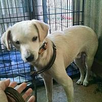 Terrier (Unknown Type, Medium) Mix Dog for adoption in Houston, Texas - Johnny Ringo