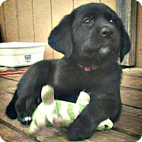 Adopt A Pet :: Meeka - Killeen, TX