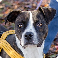 Adopt A Pet :: Danica - Greenwood, SC