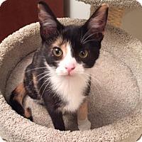 Adopt A Pet :: Ophelia - Covington, KY