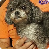 Adopt A Pet :: Star - Summerville, SC
