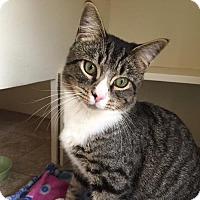 Adopt A Pet :: Mr Bojangles - Naugatuck, CT