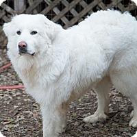 Adopt A Pet :: BONNEY - Granite Bay, CA