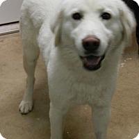 Adopt A Pet :: HOLLY - Granite Bay, CA
