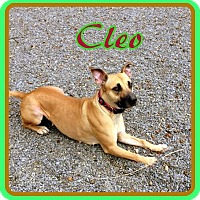 Adopt A Pet :: Cleo - Berkeley Springs, WV