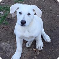 Adopt A Pet :: Theo - McKinney, TX