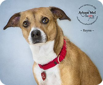 Beagle/Whippet Mix Dog for adoption in Phoenix, Arizona - Rayna