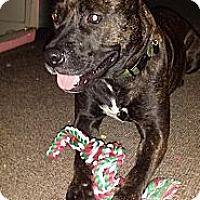 Adopt A Pet :: Sasha - Orlando, FL
