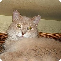 Adopt A Pet :: Troy - Lombard, IL