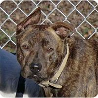 Adopt A Pet :: Cocoa - Sacramento, CA
