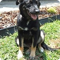 Adopt A Pet :: Zu Zu - Pineville, NC