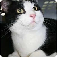 Adopt A Pet :: Manny - Frederick, MD